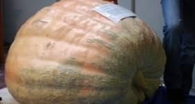 Pumpkin_thumb5