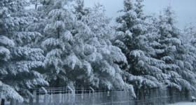 Snowy morning novemver 16 2007_thumb5